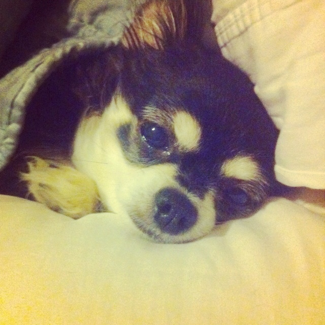 Comfy Pup Animals Puppies Pup