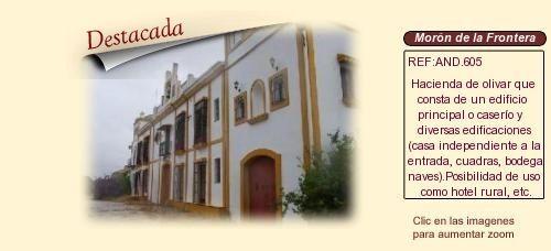 AND605 Morón de la Frontera. Sevilla.  Finca Olivar y cortijo en venta. http://www.lancoisdoval.es/casas-rurales-en-venta.html