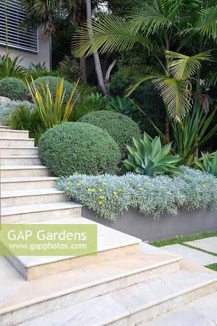 Image result for agave garden bed