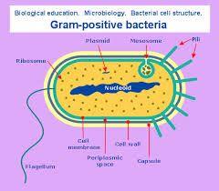 108 best biology diagrams images on pinterest ap biology biology image result for google biology diagram ccuart Images