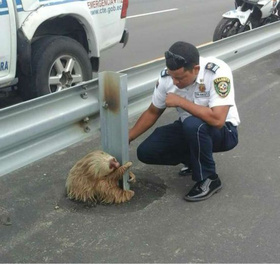 ADORABLE, BUT FRIGHTENED SLOTH RESCUED FROM SIDE OF HIGHWAY