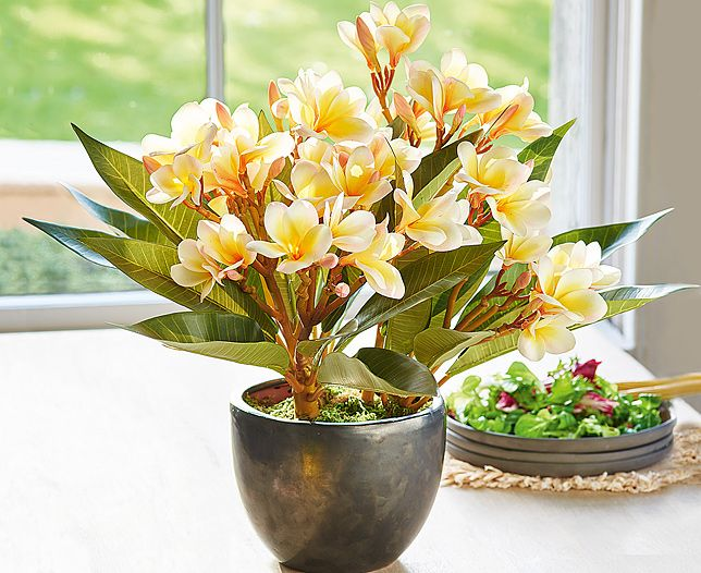 Bright and colourful but oh so wonderful. Our Potted Frangipani Arrangment will make a fantastic centerpiece to your home