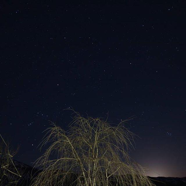 【m_s.m_a.0612】さんのInstagramをピンしています。 《. 昨日pic . 子供たちが寝静まってから行動開始。 . 山桜としだれ桜の木の間にオリオン座を発見🌃 月明かりが元気良すぎて山に沈むまで待ってもこの有り様😢 . これはこれで良しとして冬の星空は本当に綺麗でした✨ . . #冬#冬囲い#桜#夜空#夜景#星#星空#オリオン座#月#moon#写真好きな人と繋がりたい#カメラ好きな人と繋がりたい#サクラ咲け》