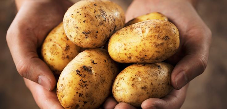 De beste manier om aardappelen te bewaren - Lifehacking