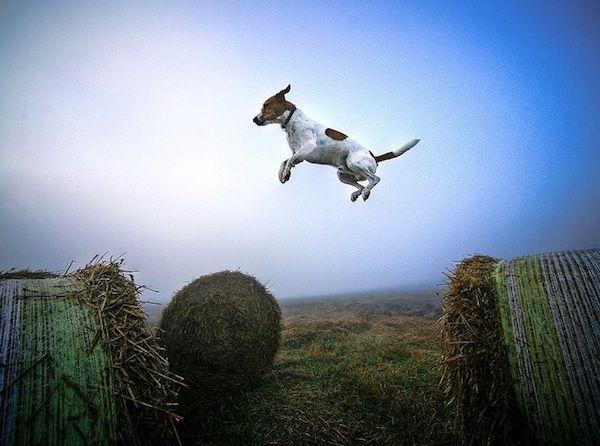 Amazing flying dogs photography