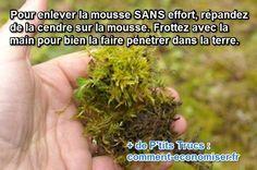 Vous avez remarqué à quel point la mousse pousse vite sur la pelouse ? C'est joli. Mais le problème, c'est qu'elle étouffe le gazon.   Découvrez l'astuce ici : http://www.comment-economiser.fr/mousse-pelouse-debarraser-sans-efort.html?utm_content=bufferafe86&utm_medium=social&utm_source=pinterest.com&utm_campaign=buffer