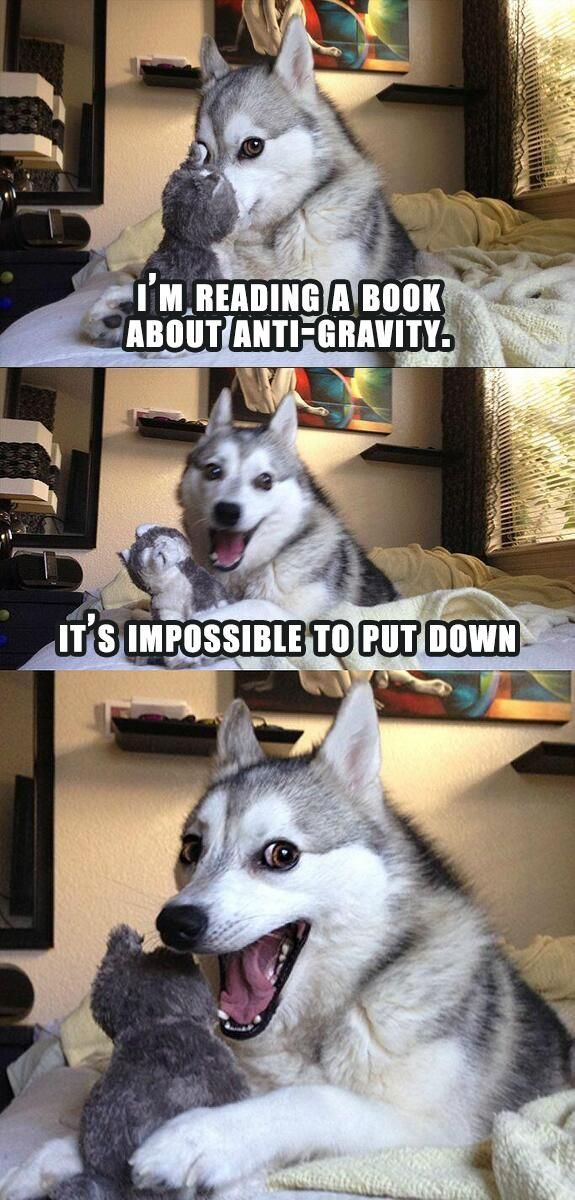 It's time for bad pun dog!