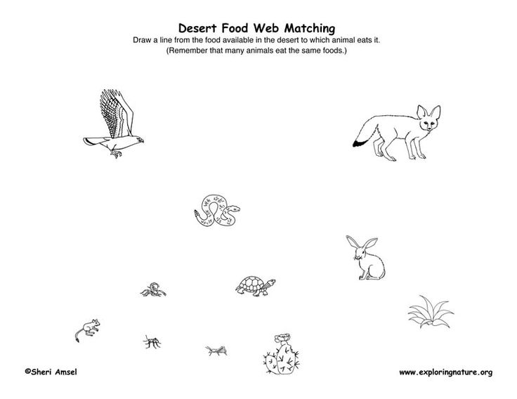 Printables Bill Nye Food Web Worksheet 1000 images about ecosystemsfood web on pinterest bill nye heres a page for constructing desert food