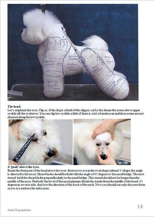 -repinned- Bichon grooming-N. J. Graniel