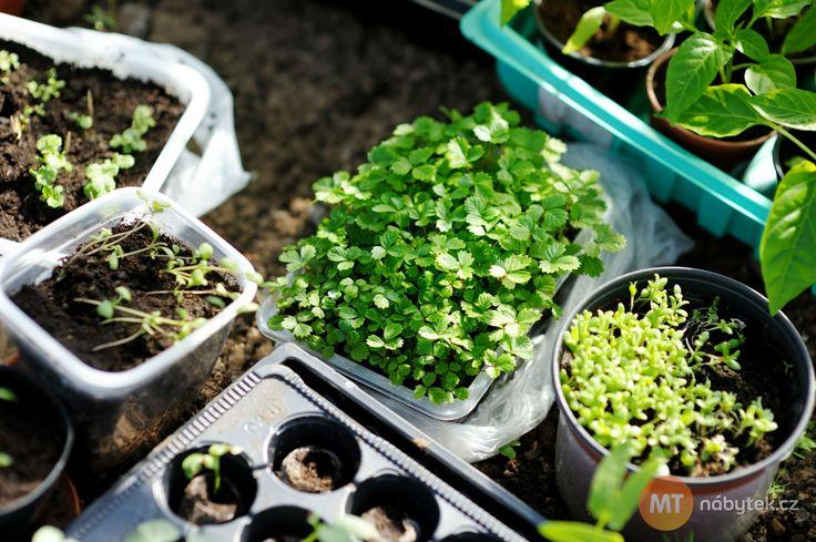<p>V únoru je ideální čas začít s předpěstováním rané zeleniny a bylinek. Foto: ©Depositphotos.com/maximcabb</p>