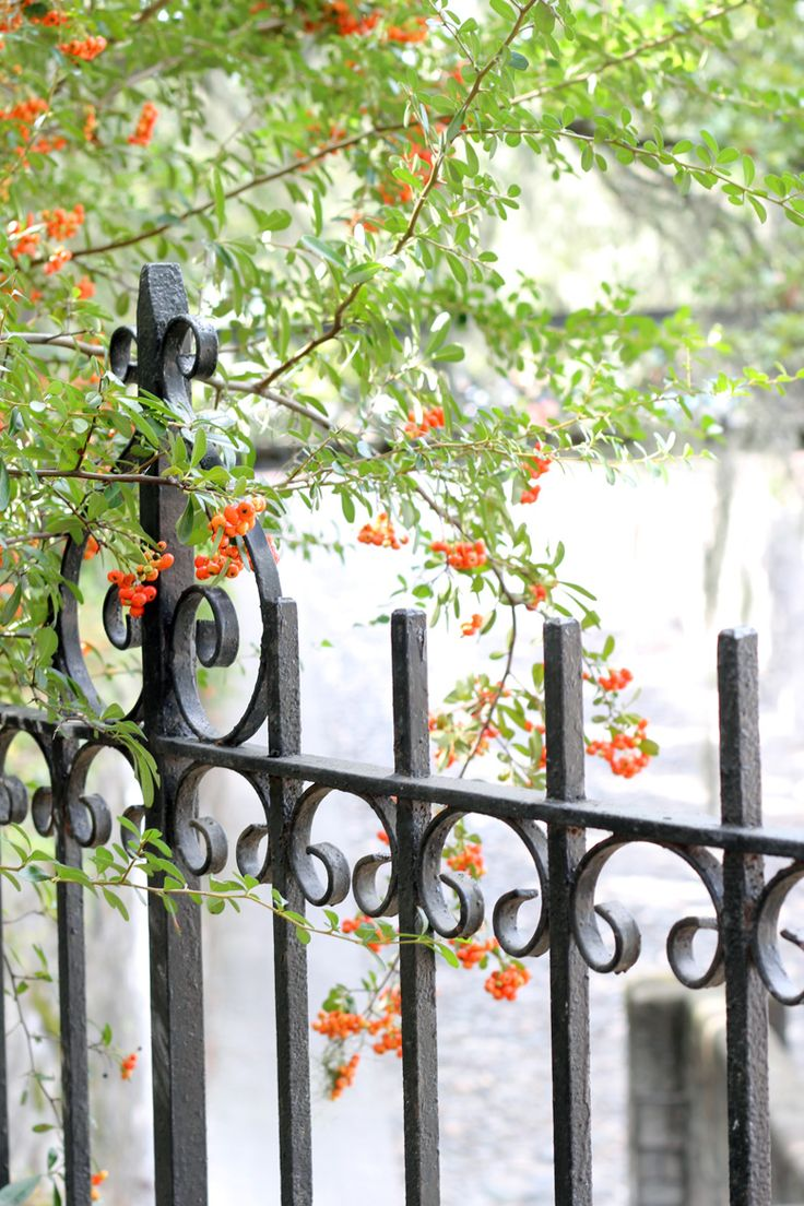 17 Best Images About Wrought Iron And Aluminum Fence On