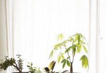 Цветочные ящики — вариант размещения растений для интерьера - Сад и огород