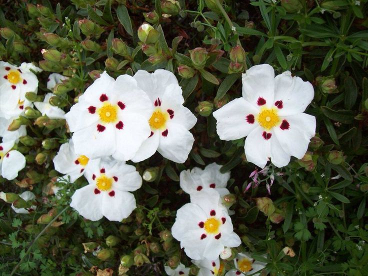 My Gorgeous Flowers...