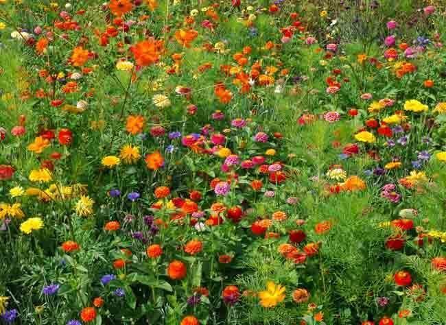 Deco Automne Romantique Bruyere Erica : Id� es sur le thème fleurs annuelles graines