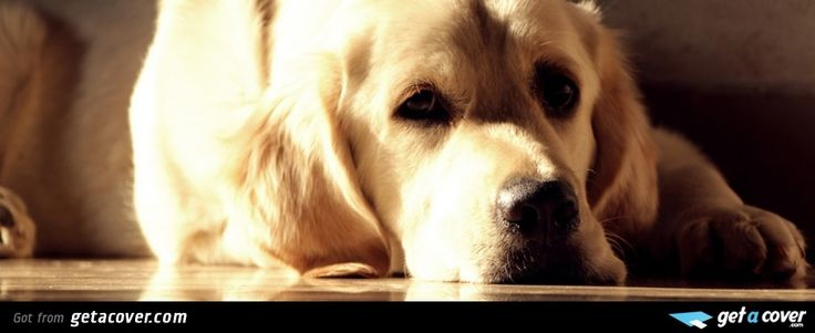 A stunning Sad dog facebook cover for your FB timeline. Choose from thousands of new Animals timeline covers with live preview.