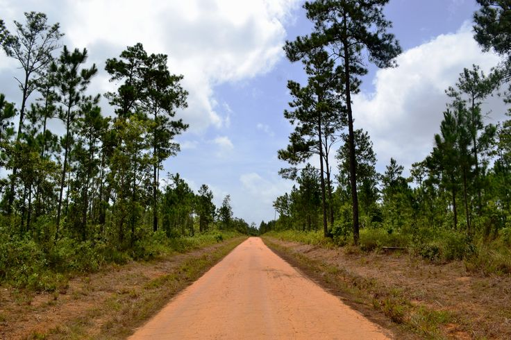 7 Must Haves for a Day Trip to Mountain Pine Forest Reserve, San Ignacio, Cayo, Belize