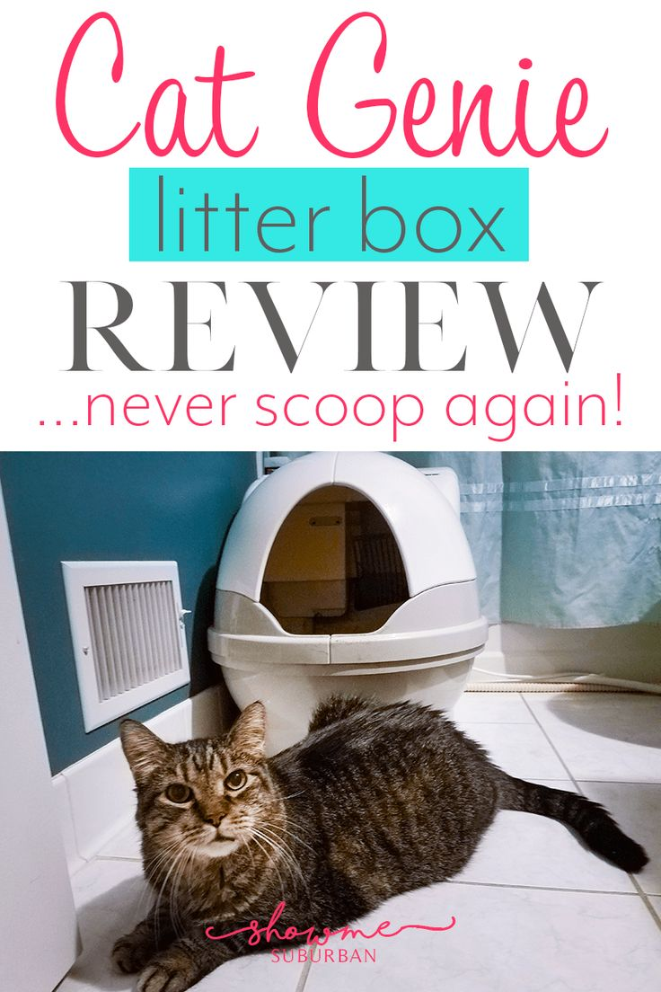 Cat Genie Litter Box Review: The Only Box You'll Ever Need