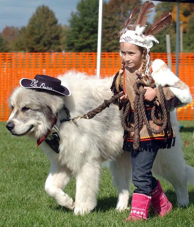 Great Pyrenees Halloween Costume perfect for my boy