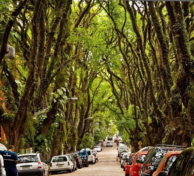 """Rua Gonçalo de Carvalho, Porto Alegre - conhecida como """"a rua mais bonita do mundo"""". São quase 500 metros de calçadas onde mais de 100 árvores da espécie Tipuana enfileiradas. Decretada como Patrimônio Histórico, Cultural, Ecológico e Ambiental pelo município em 2006."""