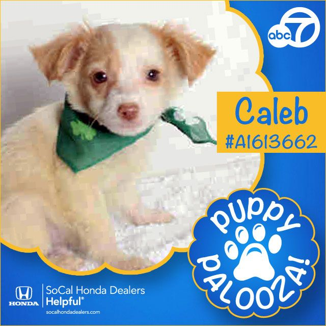 To celebrate National Puppy Day, ABC7 will host 33 adorable dogs for our 3rd annual Puppy Palooza adoption event on Wednesday, March 23, 2016.