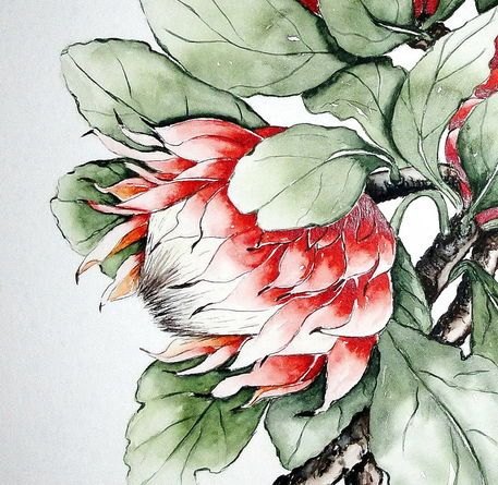 'Protea 2' von Maria Inhoven bei artflakes.com als Poster oder Kunstdruck $18.03