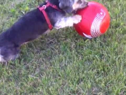 Molly and a soccer ball