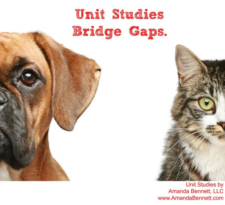 50% off Unit Study Set Sale from Amanda Bennett - unit studies designed to be used with all learning types, mobile-friendly, and no prep required!