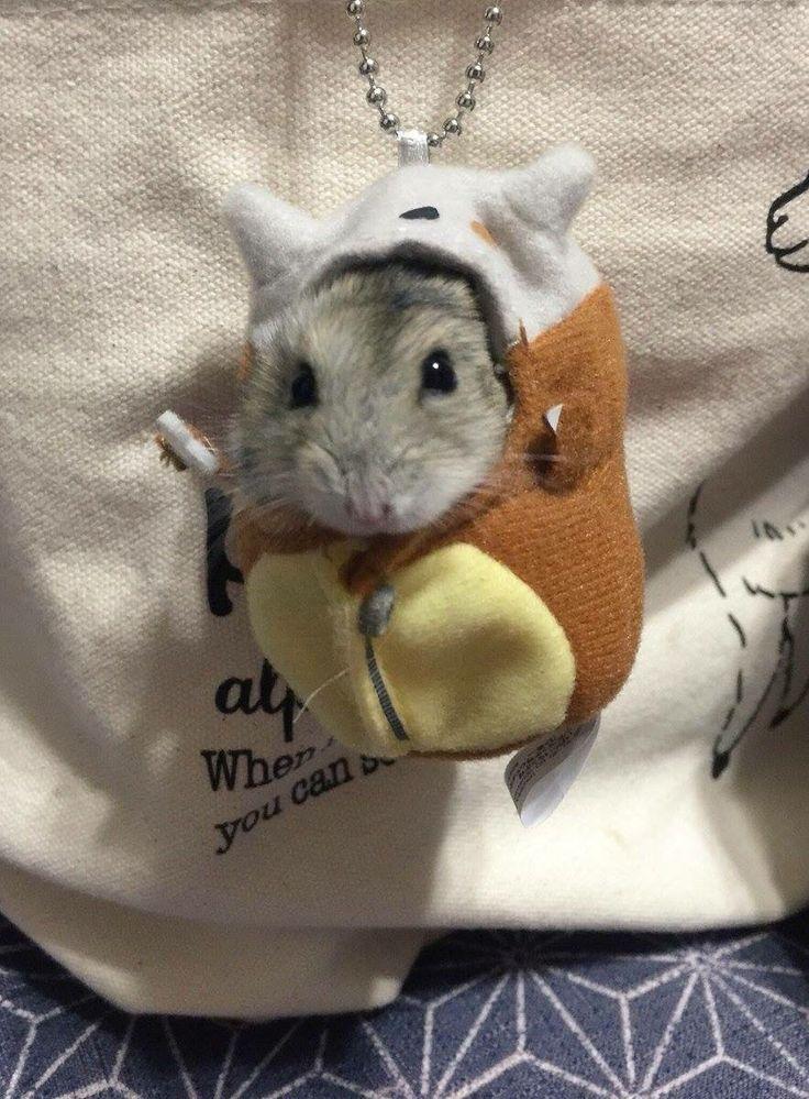 Hamster in a cubone costume! Pokéham http://ift.tt/2gbCoZY