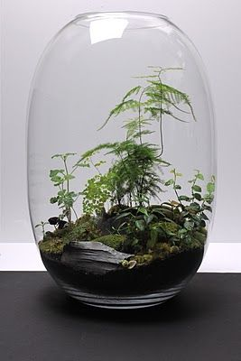 Terrarium by Grow Little, Paris: Paris, Growing Little, Hands Blown Glasses, Bonsai Terrarium, Green, Fairies House, Ferns Terrarium, Plants, Terrarium Ideas