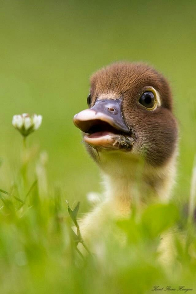Duckling and flowers ... full of wonder, full of wist ... we are all ducklings in a big world :)