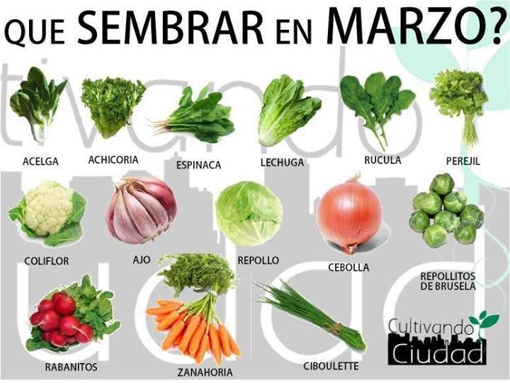 ¿Qué podemos sembrar en el Hemisferio Sur en Marzo? ¡A compartir! (vía Cultivando Ciudad) www.facebook.com/revistalima