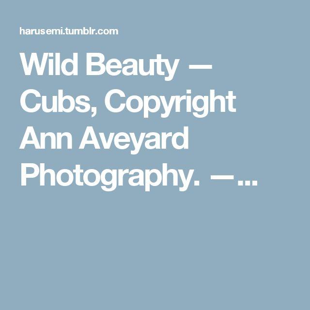 Wild Beauty — Cubs, Copyright Ann Aveyard Photography. —...