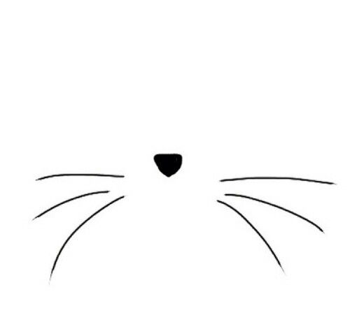 Cat whisker drawing