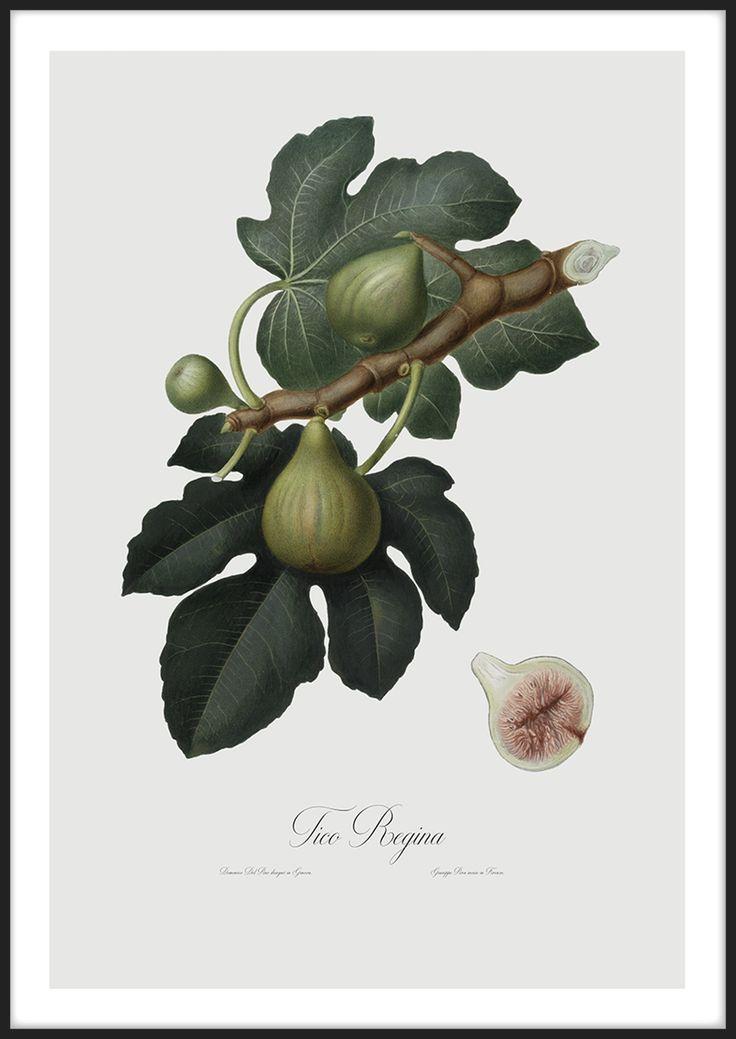 Fig, tavla från Insplendor tryckta med Giclée Fine Art Print.teknik