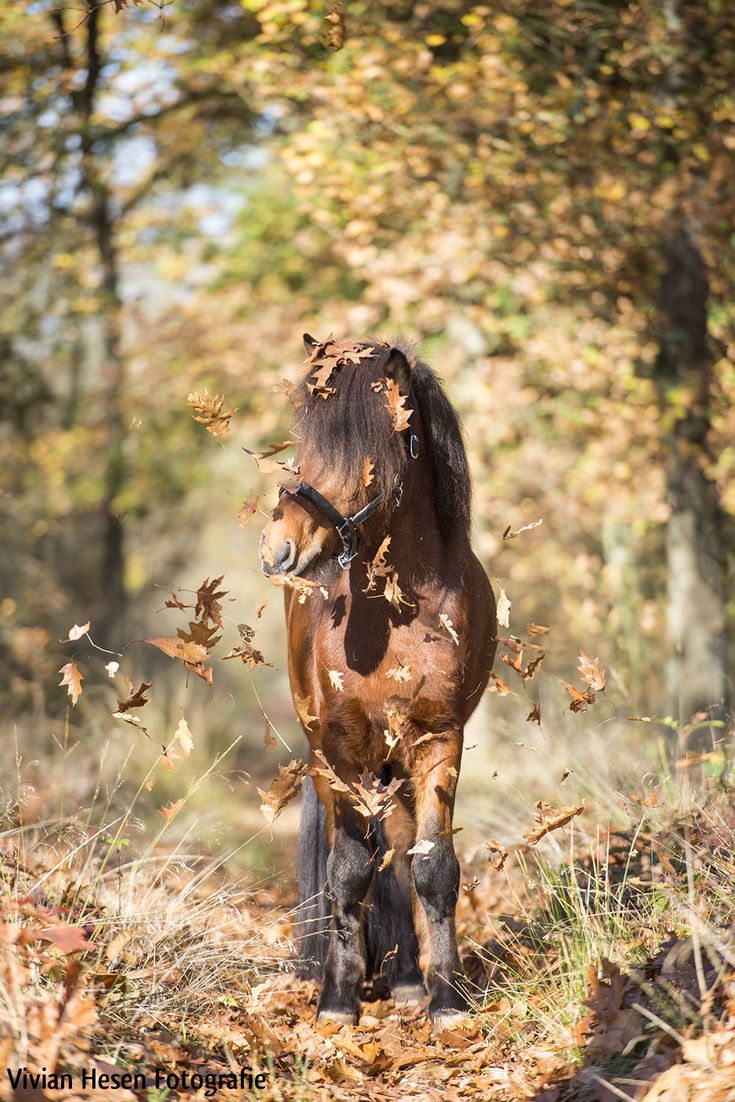 Oh so funny, horse with flying leaves.