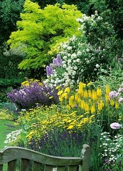 Summer border ~ Robinia pseudoacacia 'Frisia', Achillea, Santolina, Dahlia, Salvia, Delphinium, Kniphofia, Papaver and Philadelphus at Eastgrove Cottage Garden in Worcestershire.