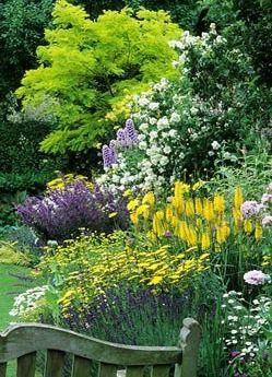 Summer border with Robinia pseudoacacia 'Frisia', Achillea, Santolina, Dahlia, Salvia, Delphinium, Kniphofia, Papaver and Philadelphus at Eastgrove Cottage Garden in Worcestershire.