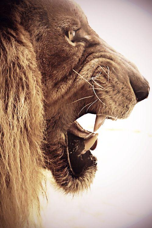 Roaring Lion Profile Tattoo 1000+ ideas abo...