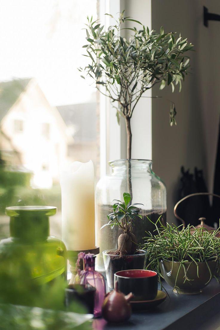 olijfboompje in glas | www.twoonhuis.nl