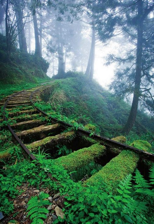 Abandoned Places Reclaimed by Nature Photos | Architectural Digest