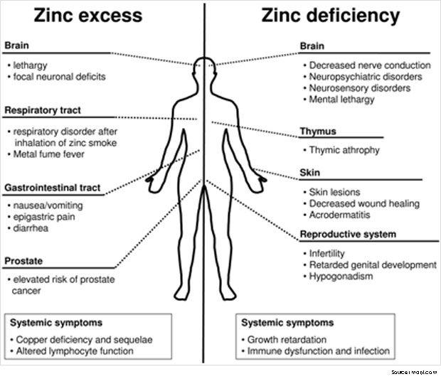 best 25 zinc foods ideas on pinterest foods high in