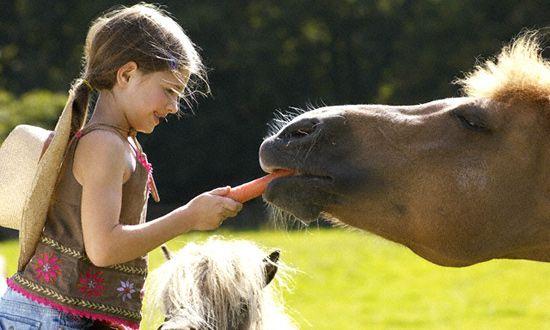 Egészséges lovasok és fogyatékkal élő gyerekek versenyeznek a a Nemzetközi Gyermekmentő Szolgálat (NGYSZ) fóti Lovasterápiás Központjában péntekt