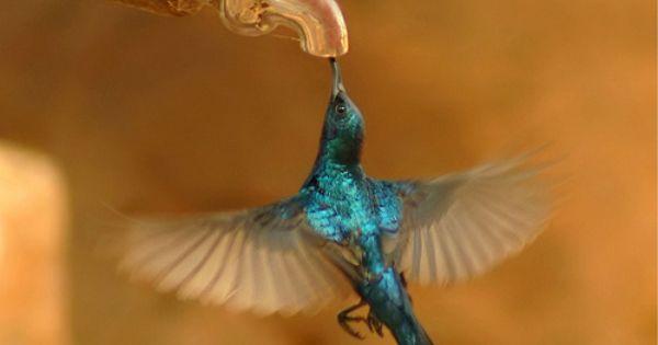 Summer Gardening: Plant these Hummingbird Attracting Flowers   Kolibrir, Drinkar och Fåglar
