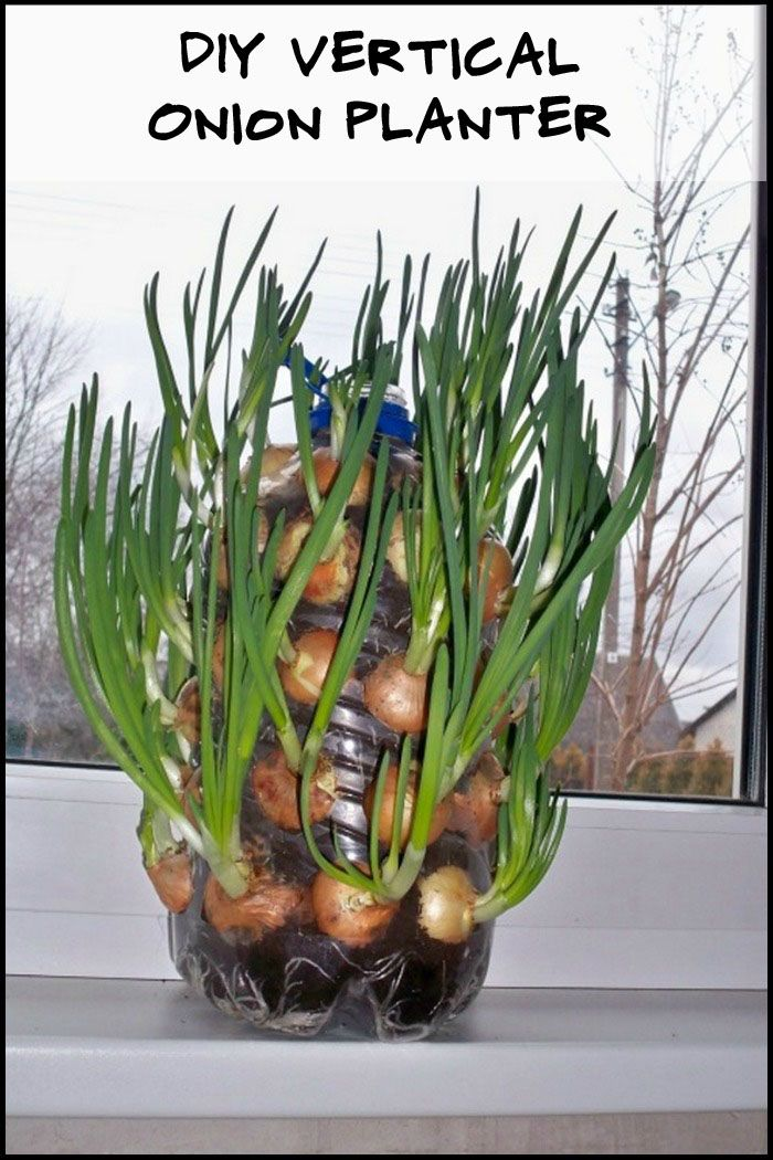 Growing onions in a small space is possible with this plastic bottle vertical onion planter!