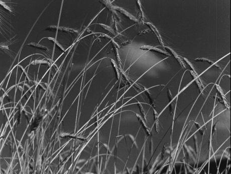 Podhale Summertime/ Lato na Podhalu [video] (REPOZYTORIUM CYFROWE FILMOTEKI NARODOWEJ) #repozytoriumcyfrowe,  #summertime
