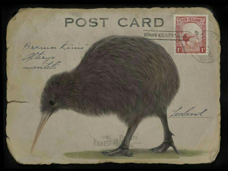 169 besten kiwi Bilder auf Pinterest | Neuseeland, Kiwi und ...