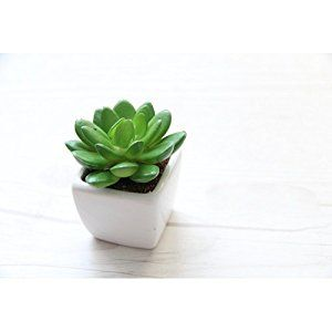 Amazon.com: Artificial Succulent Plant Small Glass Cube Artificial Plant Faux Succulent Planter Pots The Best Gift Garden/ Modern Home Decor/Office (Green): Pet Supplies