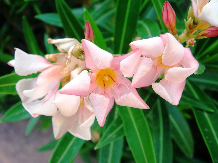10 Common Poisonous Flowers   Tips and Updates - BabaMail