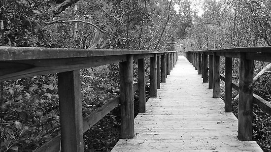 Mangrove Walk, Brooklyn, NSW, Australia