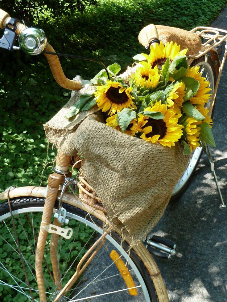 bike  sunflowers